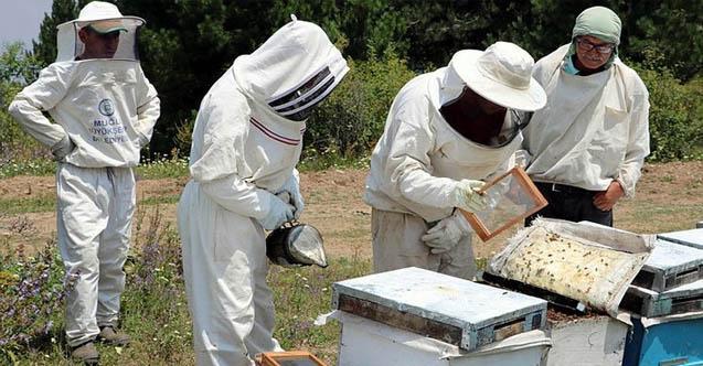 arı zehri toplama eğitimi