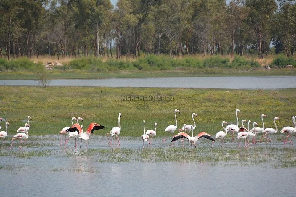 2019/11/aliaga-kus-cennetinde-flamingolar-rengarenk-goruntuler-olusturuyor-20191129AW86-1.jpg