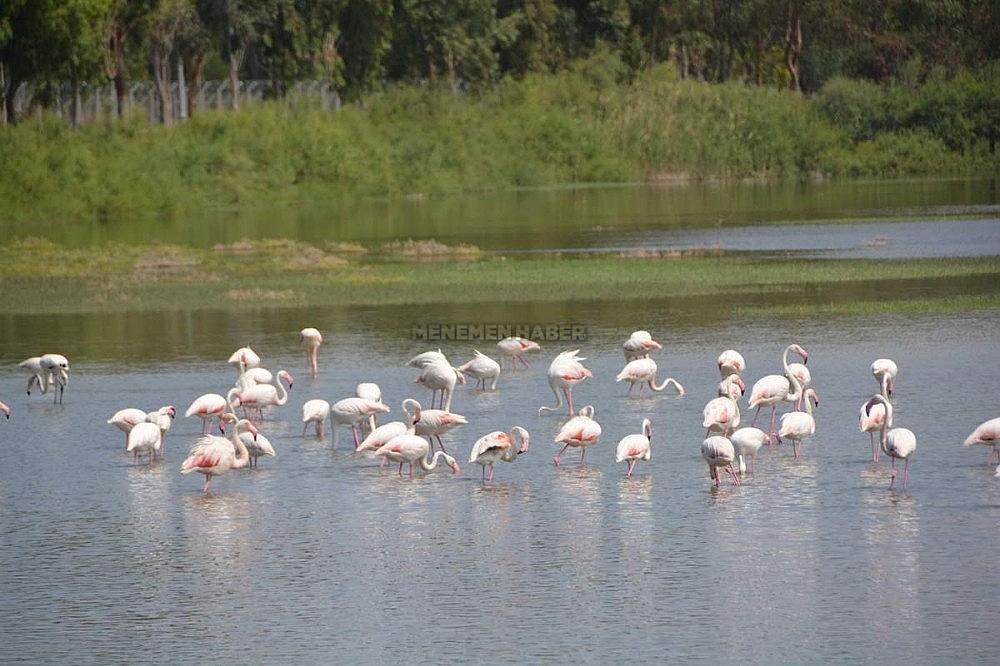 2019/11/aliaga-kus-cennetinde-flamingolar-rengarenk-goruntuler-olusturuyor-20191129AW86-2.jpg