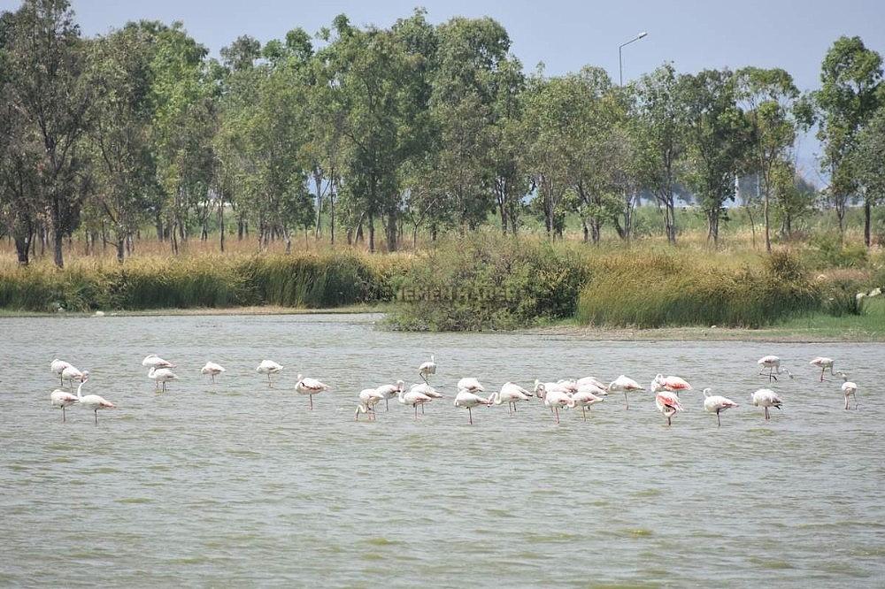 2019/11/aliaga-kus-cennetinde-flamingolar-rengarenk-goruntuler-olusturuyor-20191129AW86-3.jpg