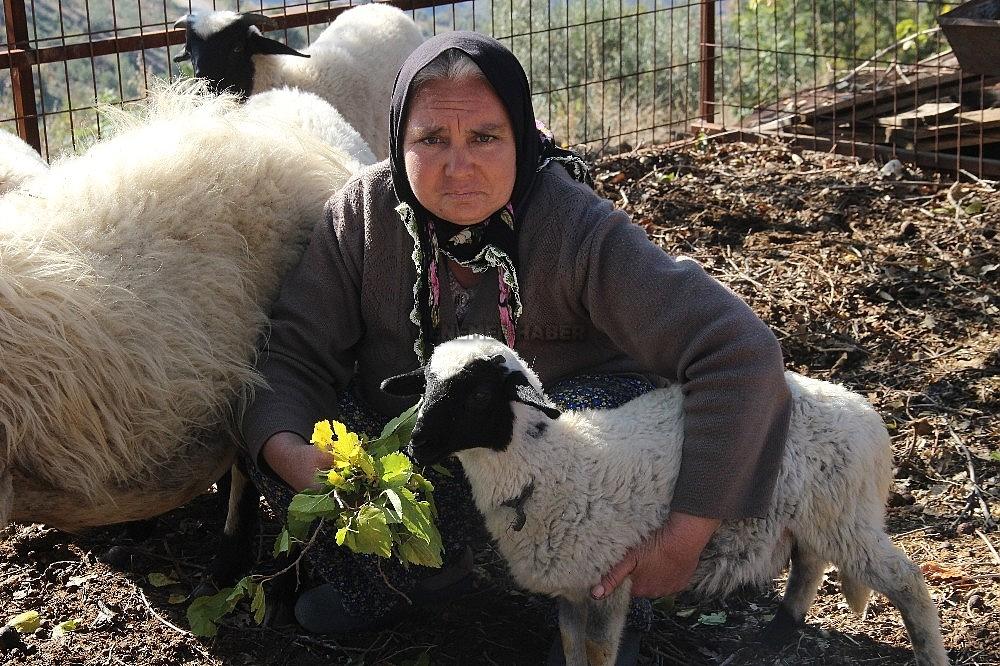 2019/12/besiz-dogan-koyunlar-sahibinin-yuzunu-guldurdu-20191207AW87-1.jpg