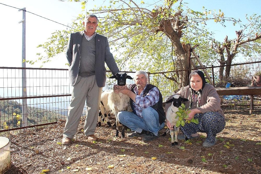 2019/12/besiz-dogan-koyunlar-sahibinin-yuzunu-guldurdu-20191207AW87-2.jpg