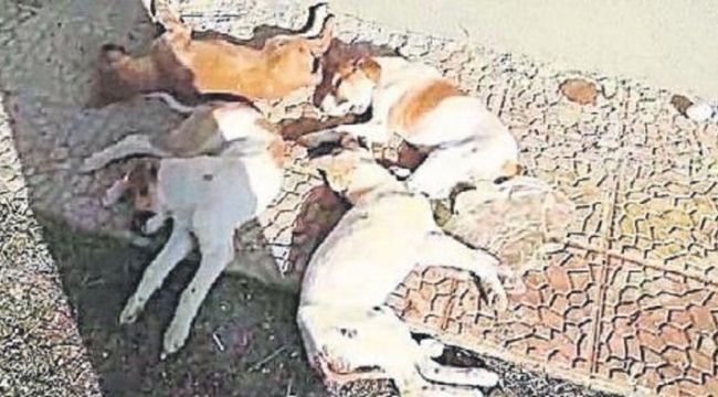 Menemen Belediyesine köpek ölümleri iddiası ile hayvan severlerden tepki