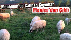 Menemen'de Çalınan Koyunlar Manisa'da Bulundu