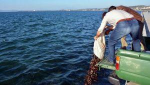 Aliağa'da Su Ürünleri Kaçakçılığı Yapan Şahıslara Operasyon