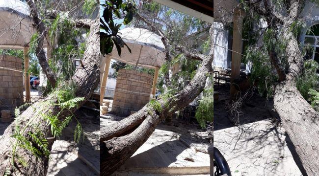 Ağaç Caminin Üzerine Devrildi