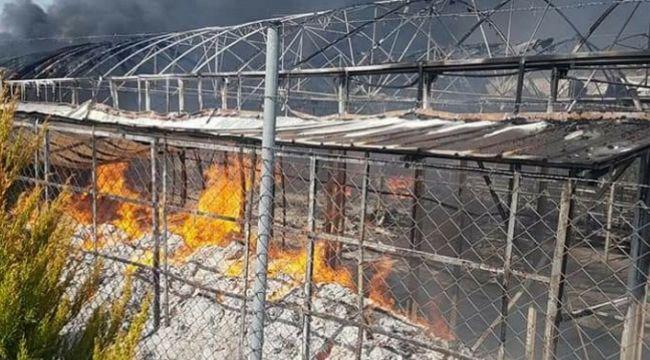 Dikili'de sera yandı, 4 milyon liralık hasar oluştu