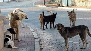 Menemen'de Başı Boş Köpekler Halkı Tedirgin Ediyor
