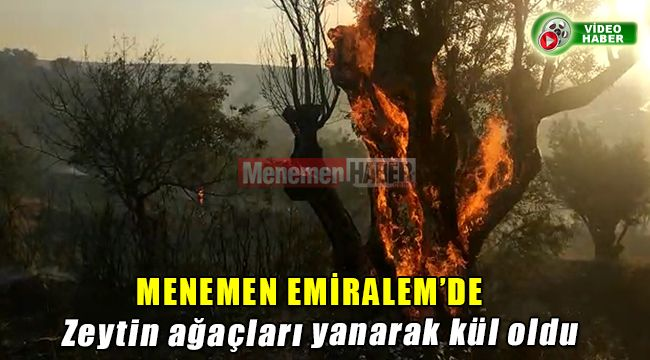 Menemen Emiralem'de çıkan yangın Zeytin ağaçlarını kül etti.