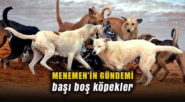 Menemen'in Gündemi Köpekler