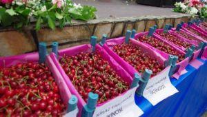 Ödemiş'de Kiraz Festivali Bu Yılda Büyük İlgi Topladı