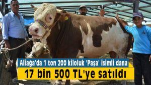 Aliağa'da 1 Ton 200 Kiloluk Dana 17 bin 500 Liraya Satıldı