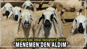 Bergama'daki Kurbanlık Vebalı Koyunlar, Menemen'den Geldi iddiası