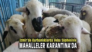 İzmir Bergama'da Kurbanlıklarda Veba Şüphesiyle 20 Mahalle Karantinaya Alındı