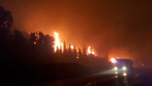 Özdere'deki yangınla ilgili Menderes Belediye Başkanı Mustafa Kayalar'dan Açıklama Geldi
