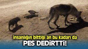 Seferihisar'da Yavru Köpekleri Ezdikten Sonra Kaçtı