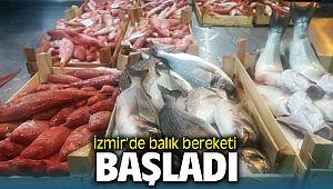 İzmir'de balık bereketi Başladı