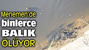 Menemen'de Gediz Nehrinden Gelen Kanal'da Binlerce Balık Can Çekişerek Ölüyor