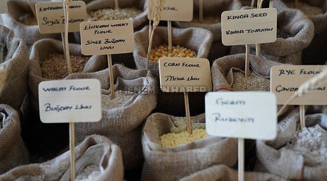 Sağlıklı besin için tohumun önemi anlatıldı