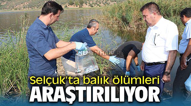 Selçuk'taki balık ölümleri araştırılmaya başladı