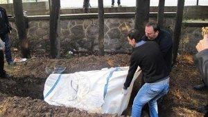 Beş yıldır gömülü olan yunusun iskeleti EÜ Tabiat Tarihi Müzesinde