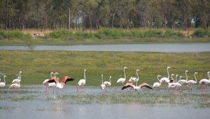 Aliağa Kuş Cennetinde flamingolar rengarenk görüntüler oluşturuyor