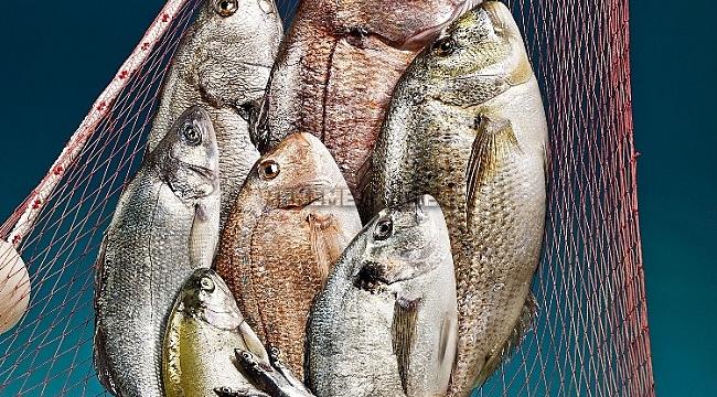 Balıkları oltalar değil objektifler yakalayacak