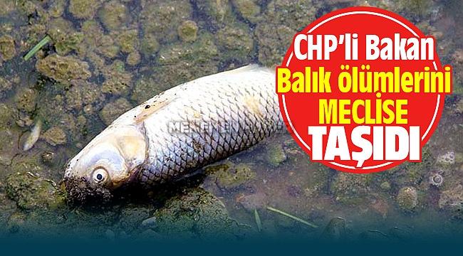 CHP İzmir Milletvekili Murat Bakan Balık Ölümlerini Meclise Taşıdı