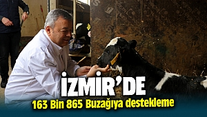 İzmir'de 163 bin 865 buzağıya destekleme