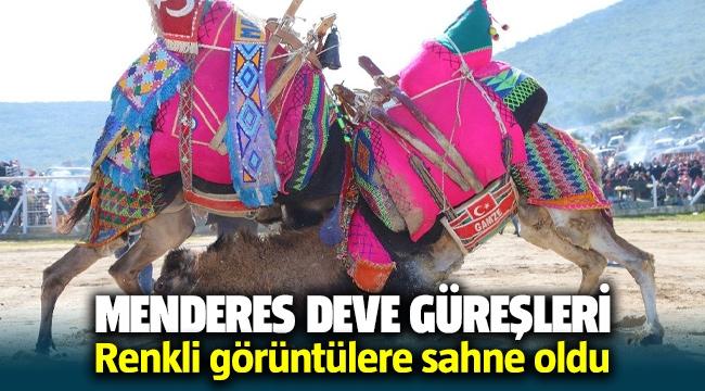 Menderes'de geleneksel deve güreşleri düzenlendi