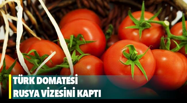 Türk domatesi Rusya vizesini kaptı
