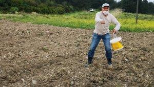Aliağa'da susam çeşitleri analiz sonrasında toprakla buluştu