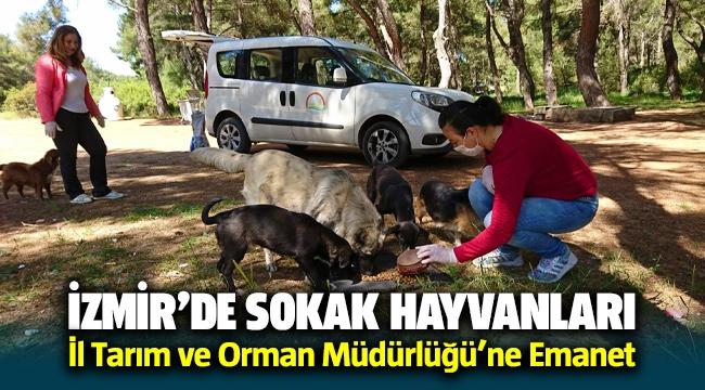 İzmir'de sokak hayvanları İl Tarım ve Orman Müdürlüğü'ne Emanet