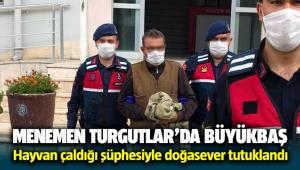 Menemen Turgutlar'da köylünün hayvanlarını çaldığı şüphesiyle doğasever tutuklandı