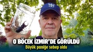 İzmir'de görülen böcek Büyük panik yarattı