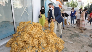 Başkan Arda ve tüm çalışanlar patateslerin dağıtımı için seferber oldu!