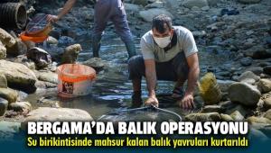 Bergama'da Su birikintisinde mahsur kalan balık yavruları kurtarıldı