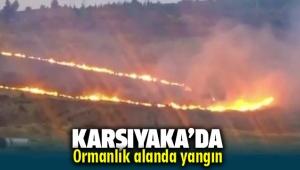 Karşıyaka'da Ormanlık Alanda Yangın