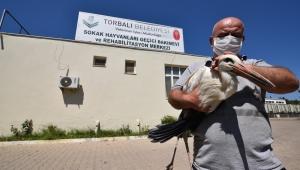 Torbalı Belediyesi leyleğin yardımına koştu