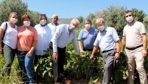 Ödemiş Belediyesi değerli ata tohumlarına sahip çıkıyor