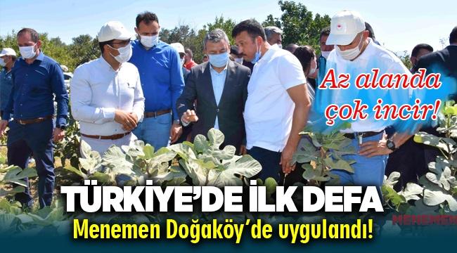Türkiye'de ilk defa Menemen'de Sık Dikim ve Telli Terbiye ile incir yetiştirildi