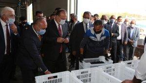 Bursa'da zeytin hasadı protokolün katılımı ile başladı