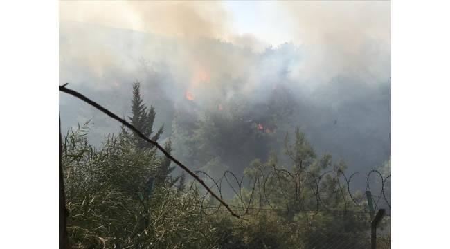 İskenderun'da orman yangını çıktı