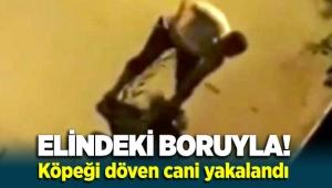 İzmir'de elindeki boruyla köpeği döven cani yakalandı