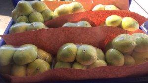 Mersin'de incir sezonu 7 lirayla kapattı