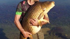 Tam 27,5 ağırlığındaki dev sazan balığı