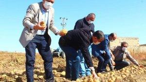 Yeşilhisar'da patates hasadı devam ediyor