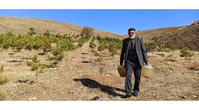 'Orman Dede', babadan kalma arazisini 11 yılda ormana dönüştürdü