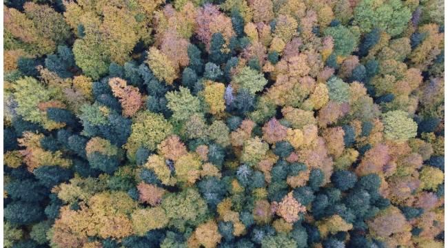 Ahmetusta Geçidi'nde rengarenk ağaçlar hayran bırakıyor