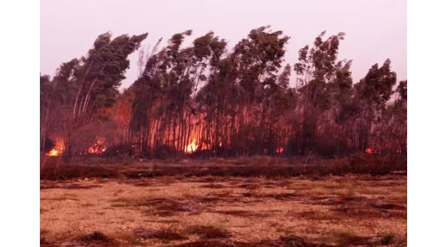 Akyaka ve Köyceğiz'de sazlık yangını